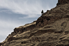Hells Canyon (#69 of 80) (absencesix) Tags: travel trees plants usa nature oregon iso100 nationalpark unitedstates july noflash northamerica isolation 2008 scrub locations 70200mm locale 200mm hellscanyon manualmode canoneos30d camera:make=canon exif:make=canon exif:iso_speed=100 geo:state=oregon july292008 hasmetastyletag naturallocale summer2008travel haslenstype sigmaexdgmacro7020028 hellscanyon0727292008 hellscanyonnationalpark hatpointpass selfrating3stars exif:focal_length=200mm 1250secatf80 geo:countrys=usa exif:model=canoneos30d camera:model=canoneos30d exif:lens=7002000mm exif:aperture=80 subjectdistanceunknown geo:city=hellscanyon hellscanyonoregonusa