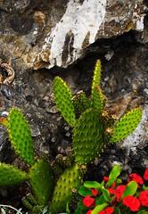 Cactus (e-freak) Tags: italy wine firenze cinqueterre arno toscana 2007 bestof2007