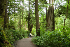 glowing forest (dolanh) Tags: oregoncoast oswaldweststatepark shortsandsbeach
