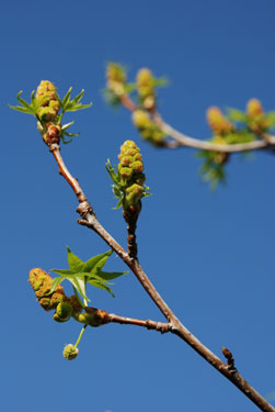 final spring