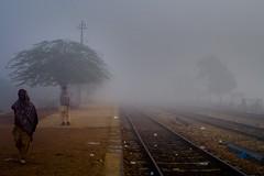 A morning walk in the fog-5