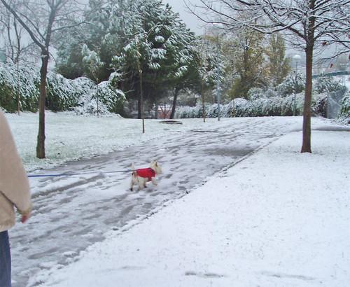 Paseando al perrón bajo la nieve