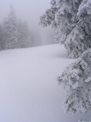 Fresh POW (Rio En Medio, New Mexico, United States) Photo
