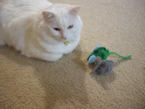 Nilla and her handmade toy mice.
