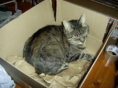 Amazon make great cat beds!! (Keith Duckworth) Tags: cat box jinx