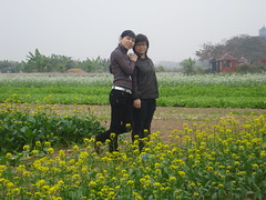 DSC09804 (phuongtruongthu) Tags: hoa vườn cải