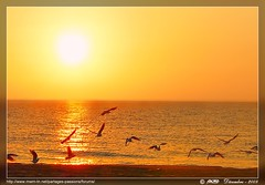 mouettes (Rached MILADI -  ) Tags: sunset sky cloud mer beach nature beautiful rouge lumix flickr good seagull bonito sable super panasonic reflet shore cielo estrellas puestadesol  18 nuage paysage animaux plage better gaviota oiseau fz nube tunisie rochers  rivage aube  mouettes           supershot  salammbo  rached salammb  salambo anawesomeshot aplusphoto diamondclassphotographer flickrdiamond  fz18 dmcfz18 miladi flickrestrellas  salamb multimegashot rachedmiladi