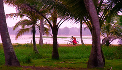 Racing home to escape the rain (carola_vanlimborgh) Tags: sunset india rain bicycle houseboat kerala southindia alleppey indianpeople