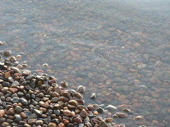 lake pebbles diagonal (Debbi Long) Tags: australia lakemacquarie