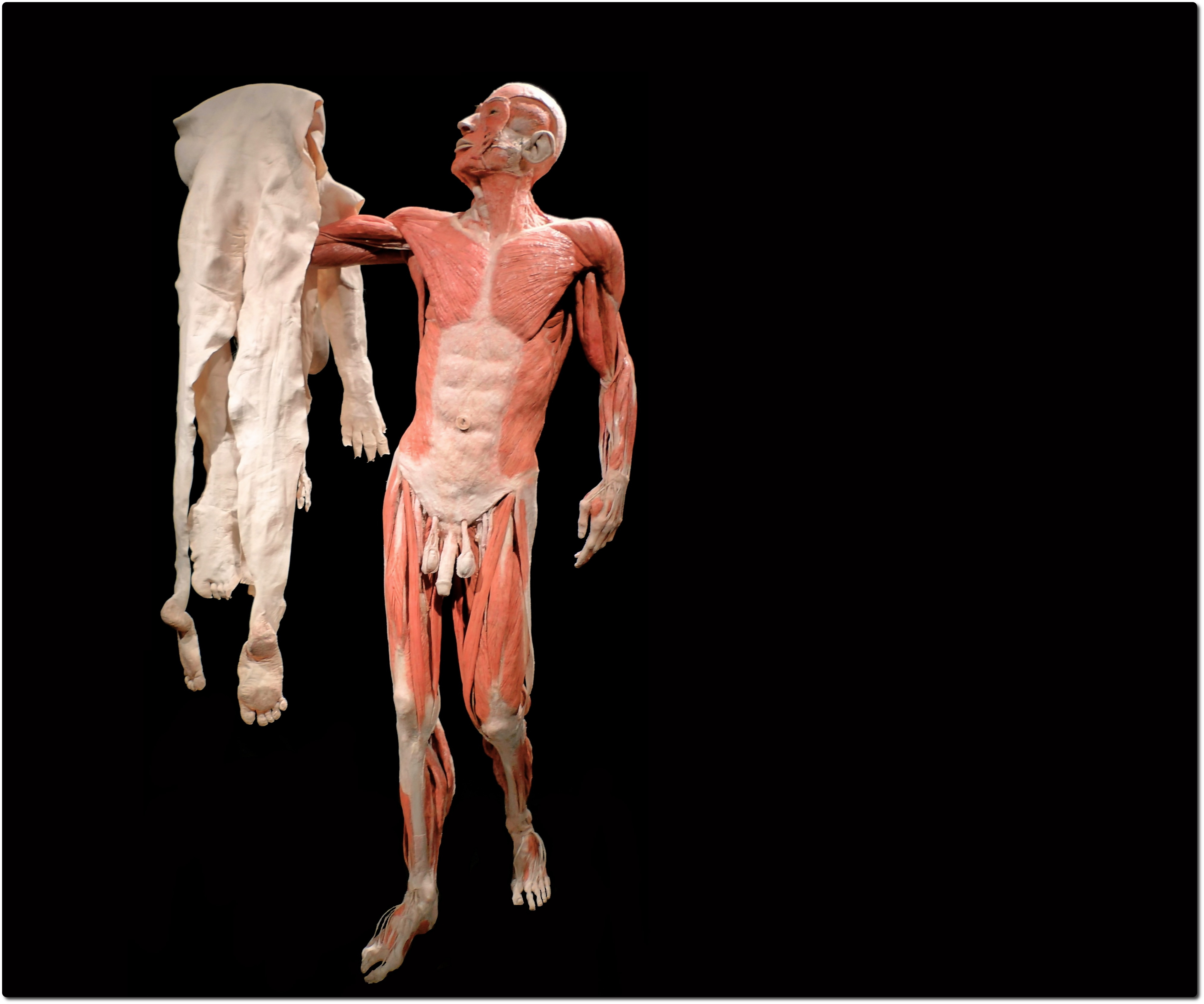 Cadaver human anatomy