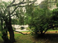 sangra! (Rodrigo Uriartt) Tags: bridge trees verde green portoalegre ponte ur rvores pixo derive reflexes deriva busshot ruriak rodrigouriartt imagemiragem behindthebuswindow
