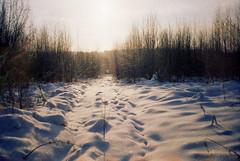 Untitled-22 (ermolindaniil) Tags: winter wild snow les forest frost branch country pole evergreens icicle zima praktica moroz frostwork russkaya iney frostart christmasgreens newyear2009 olgovo ennamnchenmacrorevuenon35mmf28 snawdrift kodakcoloriso100