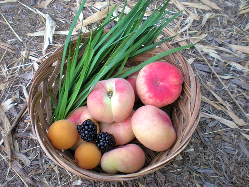 fruits and chives harvest
