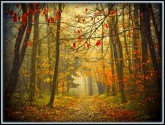 Weg im Dunst - a misty way