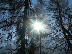 Il sole tra gli alberi dei boschi (Piova77) Tags: alberi sole boschi