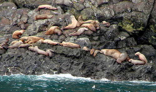 Sea Lions spread out