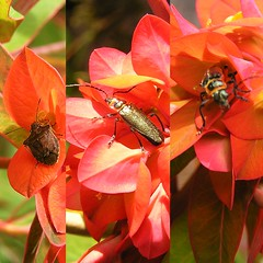 Insect triptych