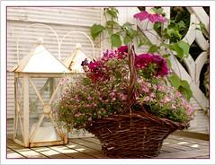 Part of my garden (Kirsten M Lentoft) Tags: pink flower garden table basket purple terrace clematis lamps momse2600 kirstenmlentoft