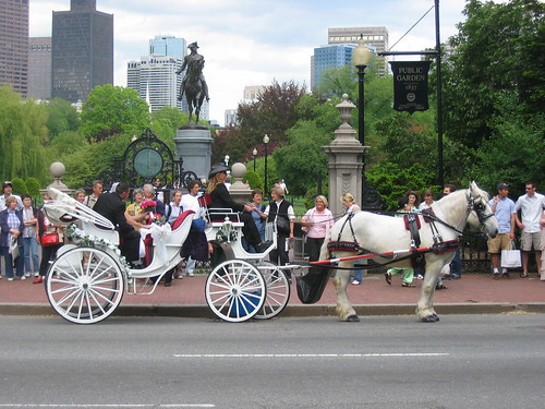 boston public garden - wedding