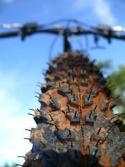 119/366 - Muddy tire