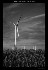 Somerton Wind Farm in B&W (Jon Frosdick) Tags: uk england sky bw white black windmill clouds wind norfolk explore windfarm somerton martham ysplixblack
