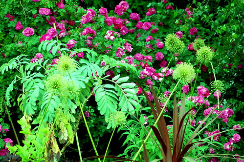 Psychedelic Garden