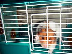 20080630-15 (kayako_) Tags: hamster pon