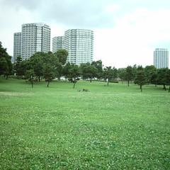 【写真】ミニデジで撮影した港パークの芝生