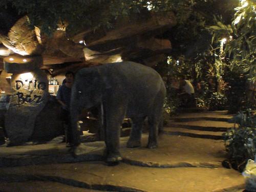 プーケットの街で象を見かけました。
