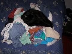 Kat Clothes