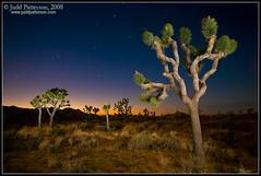 Joshua Tree Twilight (Judd Patterson) Tags: california summer night landscape twilight desert joshuatreenationalpark stockphotography flashpainting juddpatterson