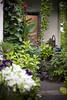 Hauseingang (crosathorian) Tags: nature garden natur garten canonef5014usm blende14