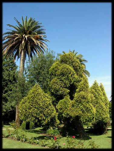 Árboles - La Toja
