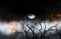 the bird and the moon week (Luz Adriana Villa A.) Tags: moon tree bird night canon arbol noche is luna powershot full creativecommons week pajaro medellin semana antioquia a650 llena luza 10faves 25faves zerofaves a650is luzavilla