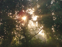 Good Morning (Syn-ST-Sia) Tags: morning light sun nature forest licht natur rays sonne wald morgen sonnenstrahlen strahl