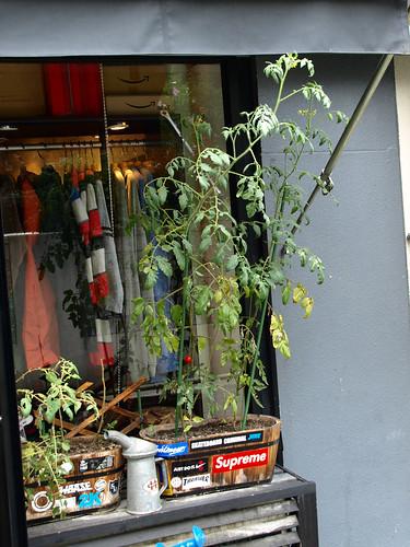 2008-09-02 Tomato