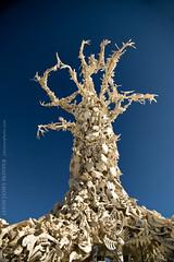 Bone Tree (skinr) Tags: blue sky detail skulls branches horns playa blackrockcity ribs haunting spines rebar artinstallation mobileart animalbones danaalbany burningman2008 thebonetree wwwjskinnerphotocom jasonjamesskinner