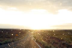 (Terin Talarico) Tags: road light sunset summer arizona sky usa window car america highway afternoon nowhere roadtrip bugs 2008 dirtywindow yaris deadbugs navajonation toyotayaris