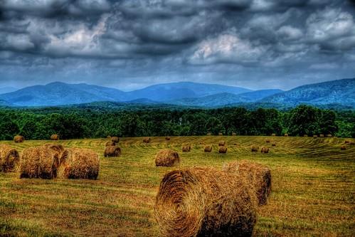 The Final Harvest by D L Ennis