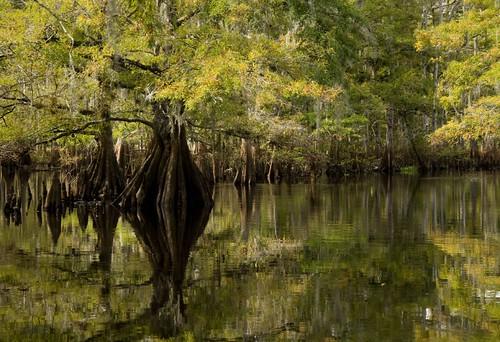 fisheating creek september 21 007