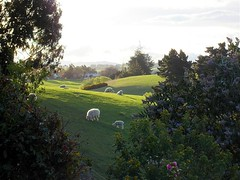 A tranquil scene (Altina) Tags: new mountains sheep north zealand otago oamaru kakanui