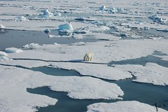 Pack FL (Flaviopsv) Tags: bear ice svalbard polar artic orso