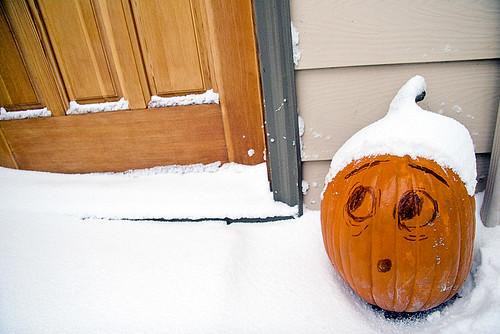 pumpkin in the snow