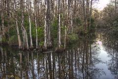 Big Cypress Landscape (Revo_1599) Tags: big florida national everglades cypress preserve hdr 3xp looproad fdrtools