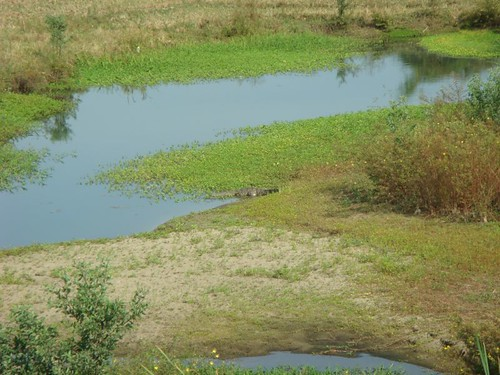 Now that's a little croc down there in the centre of the photo...