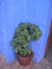 Santa Catalina (Nunoa) Tags: peru arequipa santacatalina