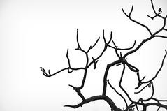 (erick monroy photo) Tags: trees blackandwhite bw nature birds animals backlight nikon 2008 d300 nikkor18200mmvr erickmonroy