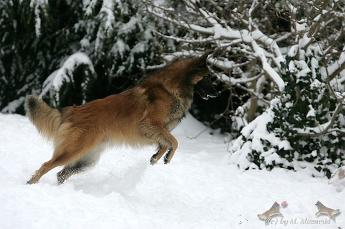 Ringo im Schnee
