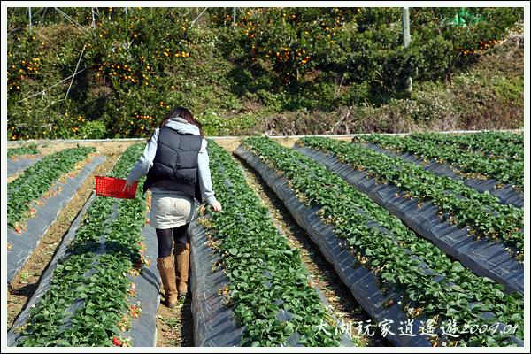 090117_05_採草莓
