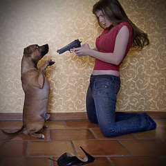 You Promised Never Again...... (Daneli) Tags: portrait dog silly art topv111 photoshop self canon topv555 topv333 shoes funny gun artistic florida air topv444 dana surreal bull topv222 terrier 5d paws bang topv666 staffordshire staffy verobeach blueribbonwinner baretta pawsintheair thelittledoglaughed beretta9mm daneli thegunisreal dontgivemecrap mydoglovestochewmyshoes